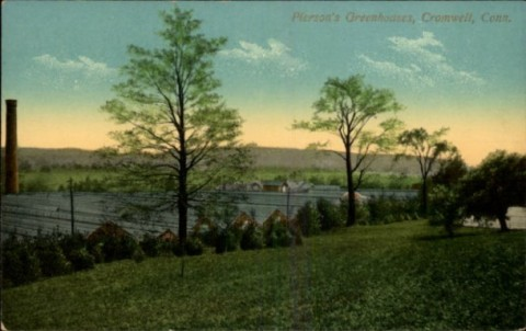 "The extensive greenhouses of A. N. Pierson, the ""Rose King"" in Cromwell, Conn. near Hartford. (connecticuthistory.com)"